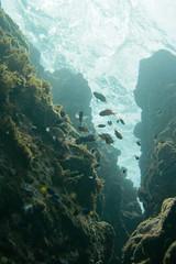 20160821-DSC_4234.jpg (d3_plus) Tags:  southizu 1nikkor185mmf18 fish marinesports apnea zoomlense sea j4 underwater nikon1  skindiving watersports sky  japan  50mmf18 50mm nikonwpn3 185mm   185mmf18 nikkor   nikon1j4  nikon  snorkeling wpn3 port scenery diving   1  drive   waterproofcase  izu