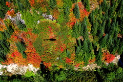 Leaf Peepin' By Helicopter (Dru!) Tags: emorycreek leaf red fall autumn leafpeeping hope bc britishcolumbia canafa frasercanyon subalpine work helicopter flight shadow vinemaple plantation loggingroad deactivation assessment