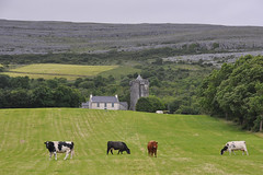 Newtown Castle (Andrew_Karter) Tags: newtowncastle newtown castle castles irishcastle irishcastles castlesofireland coclare countyclare clare ireland eire
