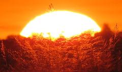 IMG_0021x (gzammarchi) Tags: italia paesaggio natura pianura campagna ravenna villanovadiravenna tramonto sole monocrome