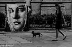 Eyes watching on you (Gian Floridia) Tags: milano viatorino alarming bn bw basset bassotto bienne doggy domenica glimpses inquietante mattina morning painting passeggiata sguardi street streetphotography sunday urban worrying