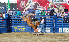 Rancho Mission Viejo Rodeo 8.27.16 1 (Marcie Gonzalez) Tags: 2016 rancho mission viejo rodeo rodeos horse horses competition ride riders contest fast action socal so cal southern california ca orange county oc usa united states america north us american tradition event events yearly cowboy cowboys western west riding marcie gonzalez marciegonzalez marciegonzalezphotography photography canon sanjuancapistranorodeo win winnings straddling movement country south compete motion rides ranch
