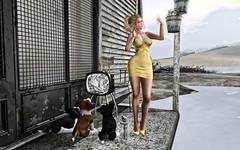 But first, let me take a Selfie (Trixie Pinelli) Tags: maitreya lelutka fashion selfie portrait sl secondlife elegance deetalez lumipro classy mesh digital softfocus avatar beach summer decor re realevil reign buzz moccino pose phone barberyumyum shopping photography blonde yellow puppies applefall