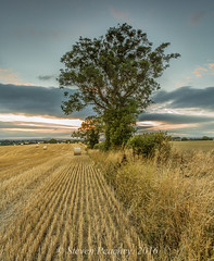 Tree And Bales (Steven Peachey) Tags: tree sunset sky clouds landscape harvest light canon farmland bales canon6d ef1740mmf4l lee09gnd lee06gnd leefilters lightroom5 stevenpeachey uk countydurham