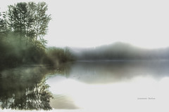 Autumn Memory (jeanmarie (been working lots of overtime)) Tags: jeanmarieshelton jeanmarie minimalism minimal minimalistic mist morning nature nikon nikond810 natureabstract trees landscape lake white whitebackground water waterscape cottagelake light reflections