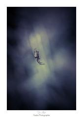 La toile d'une toile (Naska Photographie) Tags: naska photographie photo photographe paysage proxy proxyphoto araigne spider toile nuit dark darkness sombre clair obscur insectes extrieur champs nature canon eos 6d 150mm sigma bokeh color couleur