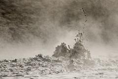 boiling mud (Prokura) Tags: iceland island schlamm mud geothermalarea hotspring heisequelle kochenderschlamm myvatn