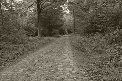 la route pave (jbi78) Tags: noirblanc canong7x route foret
