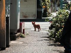 neko-neko1525 (kuro-gin) Tags: cat cats animal japan snap street straycat  canon powershot pro1