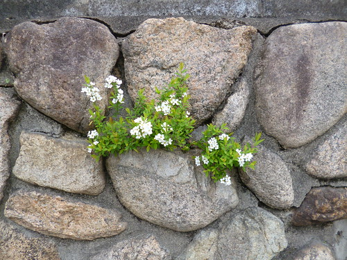 Old stone and fresh flowers