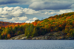 Out of Rock (davidkoiter) Tags: autumn sky cloud lake ontario david color colour tree fall water rock canon eos colorful scenic canadian 7d l series shield colourful f4 lakeofbays f4l koiter davidkoiter