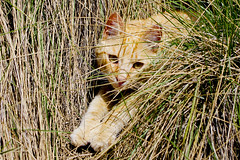 Gat al marge / Cat in the bush (SBA73) Tags: animal cat bush chat gato marge gat