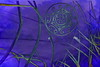 """The central fact of my life is my death"" (░S░i░l░a░n░d░i░) Tags: life plant abstract love nature death mirror purple transformation heart symbol spirit mixedmedia philosophy vision zen mind soul april imagination archetype inputoutput 2013 mindbody σ selfdiamonologue ʇɔɐɹʇsqɐ fortoleranceinhead sheldonbkopp renateeichert resilu"