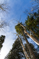 Giant Redwoods and similars (Nataraj Metz) Tags: schnee trees winter sky naturaleza snow tree nature germany bayern deutschland bavaria log europa europe european outdoor snowy nieve natur himmel natura ciel treetrunk german cielo rbol trunk alemania environment neige tronco bume allemagne arbre baum winterwonderland deutsch oberstdorf europea tronc umwelt allgu stamm baumstamm europen oberallgu outofdoors europeo oib treelog europenne  winterwunderland imfreien drausen europisch