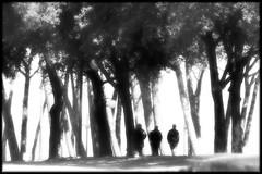 The Whisper of the Trees (donatadag) Tags: trees light white black canon shadows darkness bn