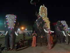 koodalmanikyam utsavam 2013 shiveli16 (koodalmanikyam-utsavam) Tags: elephant utsavam irinjalakuda koodalmanikyam irinjalakudautsavam shiveli koodalmanikyamtemple koodalmanikyamutsavam2013 koodalmanikyamutsavamphotos