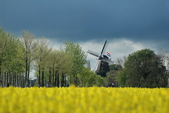 Coronation day (powerfocusfotografie) Tags: holland netherlands windmill yellow landscape nikon king colours groningen henk coronation koning kroning powerfocusfotografie
