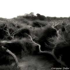 """Mystique"" - ""Mystic"" (Corinne DEFER - DoubleCo) Tags: travel sea blackandwhite bw mer france tree art blancoynegro nature square landscapes noiretblanc nb squareformat paysage crpuscule arbre paesaggi paysages contrejour paisagens landschaften carr defer  lebrusc sixfourslesplages lesembiez spiritofphotography carrfranais corinnedefer updatecollection squarepoetry lesembiers"