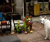 Meet and Greet (HOARYHEAD) Tags: dog minnesota downtown minneapolis germanshepherd ekko whitegermanshepherd meetandgreet minneapolismn nikond700 echodogswhitegermanshepherdrescue nikon28300mm metalbulldog whatamisupposedtowiththisdog jamesandlauriebooksellers