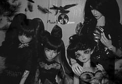 Moonlight Raven (serenity jenny) Tags: white hot ball dark dami doll dolls skin vincent band elf willow soul moonlight bjd lovely suki roxy raven fairyland joint eliya rockers celine vito ws jointed elfdoll souldoll minifee sharics