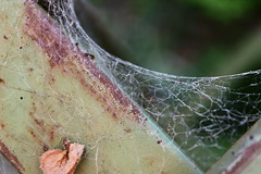 spider web (Ella Raven) Tags: beauty contrast spider patterns web cobweb