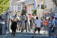 Abrivado_Voto_2016-6 (amcadweb) Tags: fontvieille camargue taureau fte