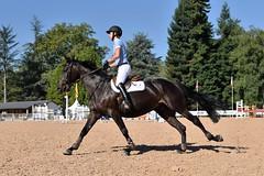 DSC_0970 (2) (ploufjf_64) Tags: paus show jumping chevaux pau 2016
