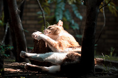 neko-neko1462 (kuro-gin) Tags: cat cats animal japan snap street straycat