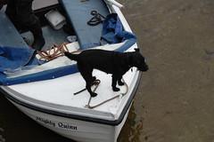 Scottish Friends (charlieangel_br) Tags: dogonaboat puppy dog lochlomond luss scotland