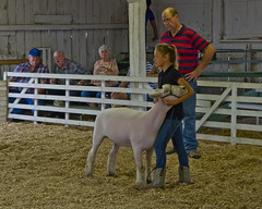 Sheep Show (ramseybuckeye) Tags: allen county fair lima ohio pentax life 2016 sheep competition show showing girl junior youth