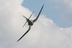 Dave's F4U Corsair-250 (Scott Alan McClurg) Tags: lumspond academyofmodelaviation airshow aircraft ama aviation bear bomber club corsair delaware delawarercclub event f4u fighter kirkwood military modelaviation statepark worldwar2 ww2 wwii
