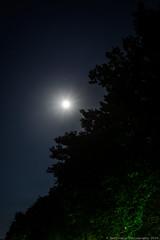 Moonlight and treeline at Ioannina (Rentoumis Phoography) Tags: moonlight moon treeline stars night ioannina