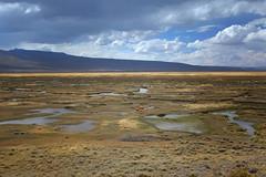 DSCF1417 (nabhill13) Tags: peru pampa alpacas