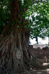 150501_DSC_1972-1 (mamaligamania) Tags: changwatphranakhonsiayuttha changwatphranakhonsiayutthaya th ayutthaya thailand budda
