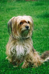 Marla (Michael Eickelmann) Tags: dog hund portrait beauty schn animals tiere pets haustiere panasonic lumix fz 200