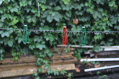 (serggusev) Tags:    rain wet clothespins