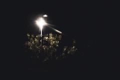 274 // 366 - Untitled (Job Abril) Tags: paisaje landscape nightphotography fotografianocturna tree streetphotography streetlight artisticphotography conceptualphotography 365 nikon