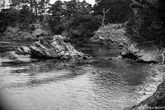 Whaler's Cove at F1 (tom911r7) Tags: thomasbrichta tom911r7 leica leicacamera leicaakademieusa blackandwhite bw landscape pointlobos fineart