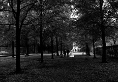 (Michad90) Tags: wrzburg residenz park bride bw black white