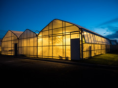 Blue-hour greenhouses (Podsville) Tags: eastlansing msu mabon michigan michiganstateuniversity september autumn equinox fall