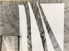 12D/Pg1 darkroom experiments (Tallis Photography) Tags: tallis thomastallis photography darkroom experiments 12d