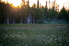 fluffy3 (torivonglory) Tags: lapland lappland lappi landscape landschaft finland finnland midsummer midnightsun summer sommer sonnenuntergang sunset sunny nationalpark alivingdog canon canon6d 6d