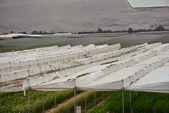 diffusing fog catchers (cam17) Tags: arica chile aricachile fogcatcher garuacatcher irrigationsystem fogcatchingnet atacamadesert atacama diffuser shadenet sunscreen