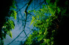 Life is Green (Brian Xavier) Tags: window nature horizontal hiking pacificnorthwest ferns naturalbeauty issaquah springseason colorimage uptothesky traditionplateau bxphoto brianxavierphotography brianxavier bxfoto bxfotocom copyrightbrianxavier fernportal