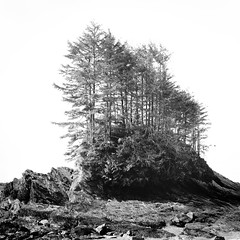 Botanical Beach, British Columbia (Adam Garelick) Tags: blackandwhite canada 120 6x6 film nature water monochrome mediumformat landscape spring hasselblad vancouverisland 100 botanicalbeach fujineopanacros 2013 ilfordilfosol3 247m2
