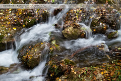 Ro Bohilgues (Toni Duarte) Tags: trees espaa naturaleza nature water valencia forest reflections landscape spain agua arboles paisaje h2o bosque reflejos comunidadvalenciana ademuz toniduarte valenciancommunity riobohilgues