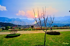 . (Rambonp love's all the crea) Tags: park flowers blue red wallpaper sky india white mountains green tourism nature yellow clouds canon landscape paradise day tulips hills kashmir srinagar jk hillstation touristplace tulipgardensrinagar