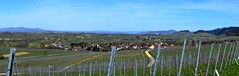 South- Germany (Zunzingen/ Buggingen bei Mllheim) (barrabez_germany) Tags: panorama wine baden wineyard reben mllheim buggingen southgermany castelberg zunzingen dattingen