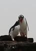 "34 Saunder's Island, Falklands • <a style=""font-size:0.8em;"" href=""http://www.flickr.com/photos/36838853@N03/8653070483/"" target=""_blank"">View on Flickr</a>"