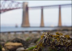 Day 28 - 13th April 2013 (jimreid78) Tags: forthbridges